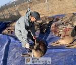 상주시, 지난해 야생 멧돼지 1,373마리 포획,   ,   농작물 피해 예방 및 아프리카…